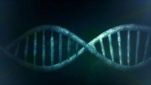 Huella dactilar para detectar jamones fraudulentos