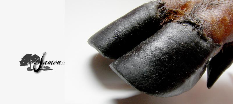 Pata negra de cerdo ibérico